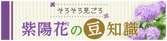 そろそろ見ごろ紫陽花の豆知識