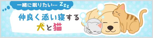 一緒に眠りたい…zzz 仲良く添い寝する犬と猫