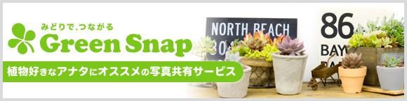 植物好きなアナタにオススメの写真共有サービス GreenSnap