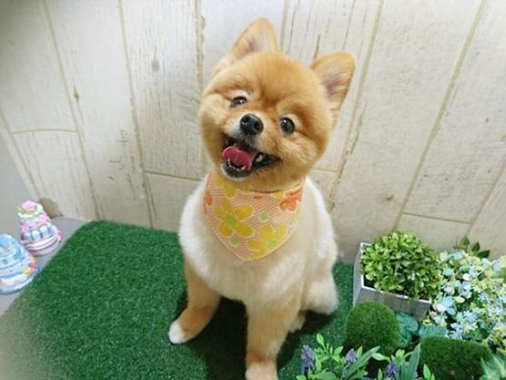 ソフトバンク 犬 犬種