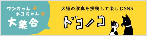 ワンちゃんネコちゃん大集合 犬猫の写真を投稿して楽しむSNS「ドコノコ」